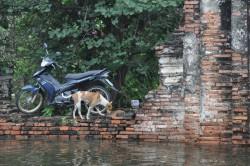 flooddogs1