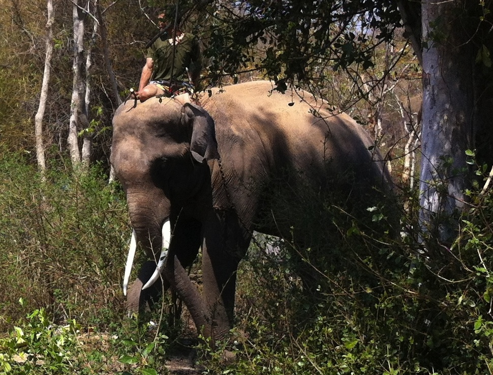 Bull elephant went crazy at Huahin