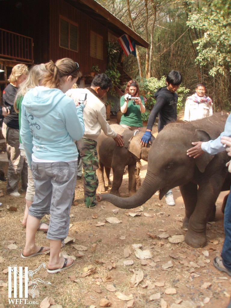 WFFT volunteers donate a ton of milk replacer for the baby elephants