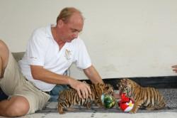 tigers8