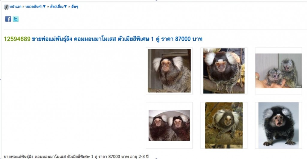 Common marmosets being sold online