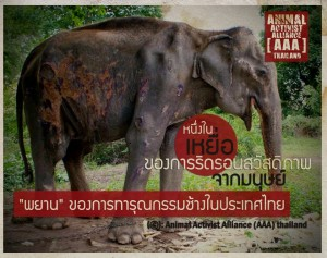 "AAA poster of ""June"" an elephant rescued by WFFT"