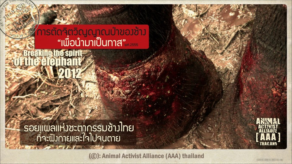 "Campaign poster by ""AAA Thailand"""