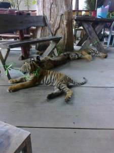 "Tiger cubs found at a ""floating market"""