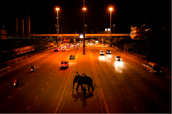 A Street Elephant Crosses a Busy Road in Bangkok - Copyright Brent Lewin