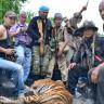 Wild tiger killed in Yala province