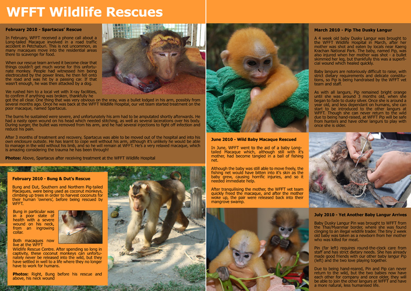 WFFT Annual Review 2010 3