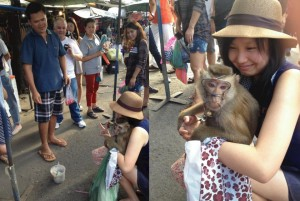 A monkey exploited on Bangkok weekend market