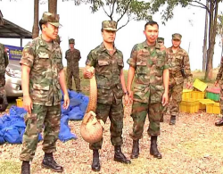 Thai marines pose with pangolins