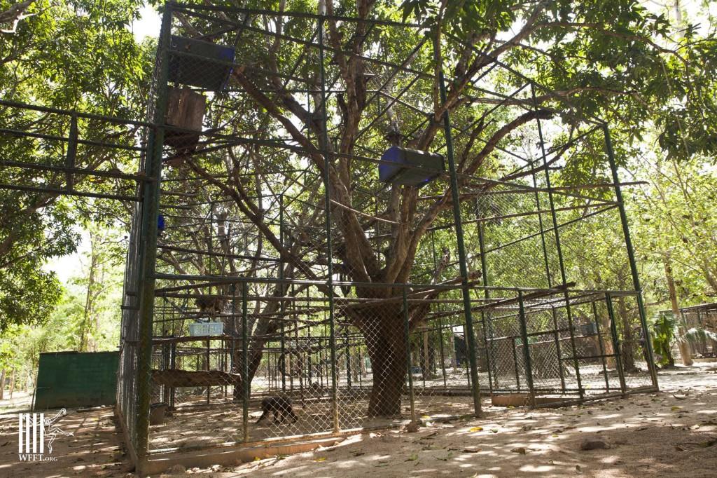 Resocializing enclosure