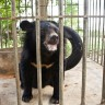 A bear rescue long overdue...