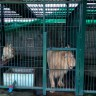 """Illegal wildlife traders in Thailand """"busted"""" is """"business as usual"""""""