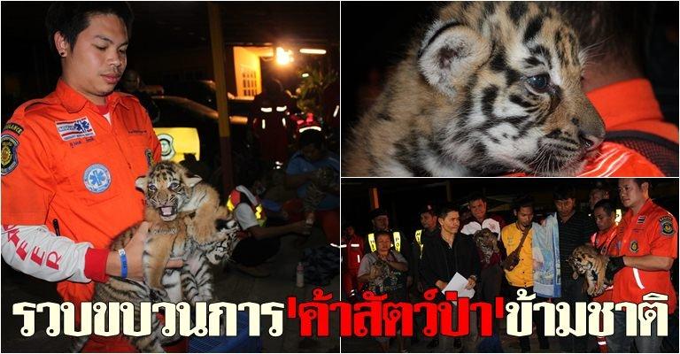 tigers Khonkaen feb 2014
