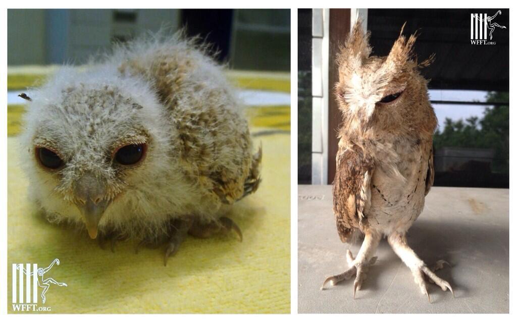 OWL2014 WFFT