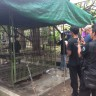 Canoe, the Bangkok chimp, getting help form authorities