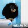 A gibbon in your toilet?