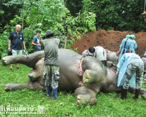 Wild elephants found dead at Pala-U forest