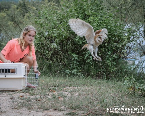 Rescued wildlife releases!