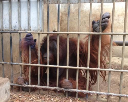 Press release on 14 orangutans to be repatriated