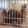 Press release on 14 orangutans to be repatriated