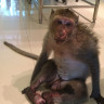 A bad start of the day for this monkey
