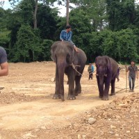 Rescued elephant to be released back to the wild