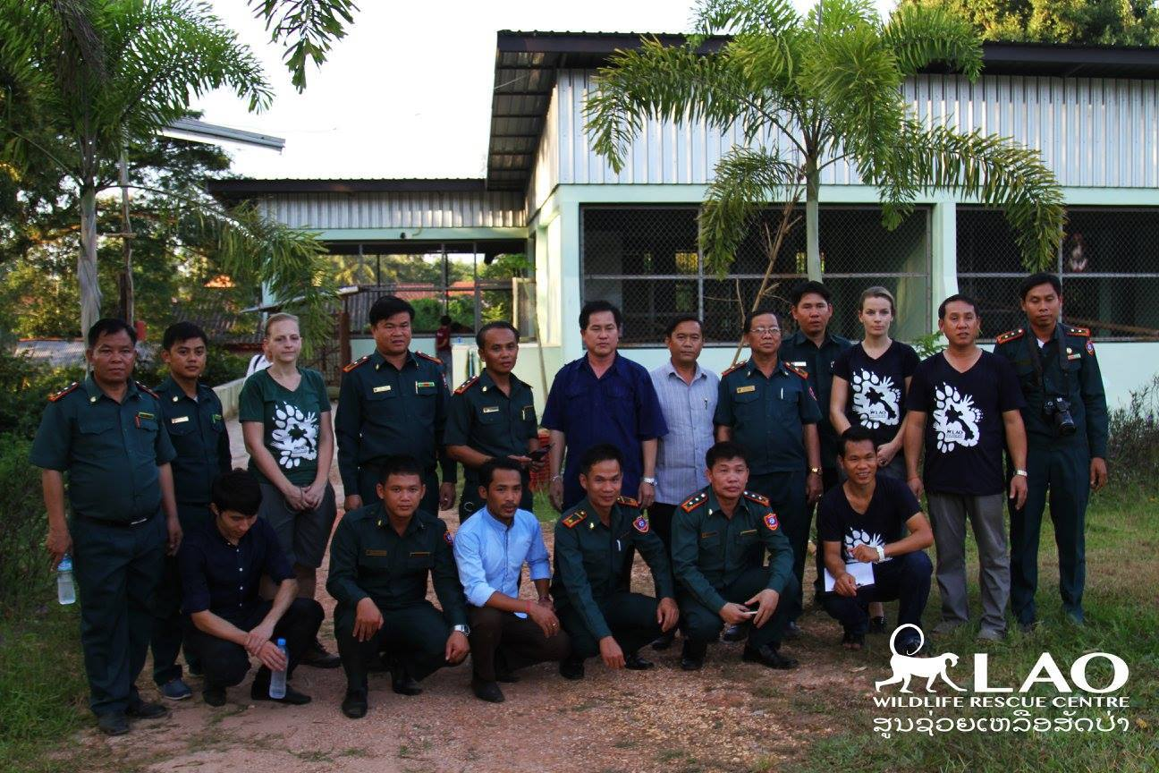 Large Pangolin Rescue On Thai-Lao Border