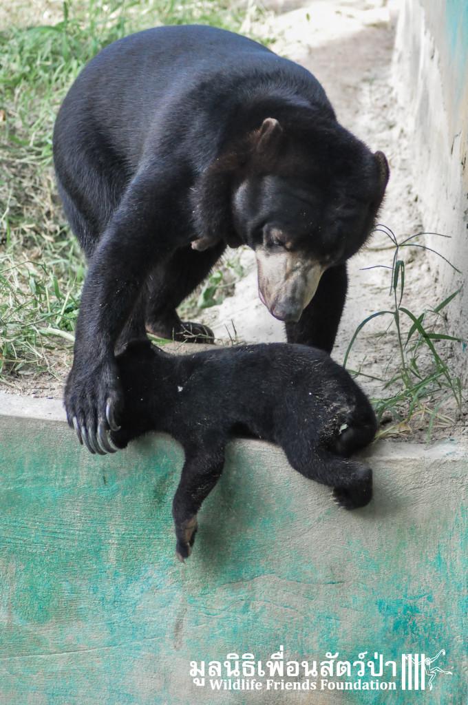 Galamair&Baby 151015 804