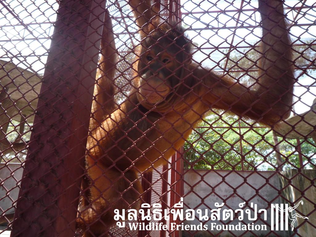 PhuketOrangs3