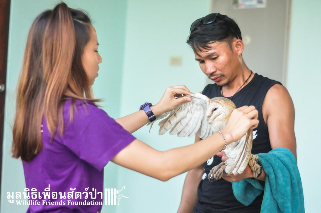 Barn owl rescue 091215 944