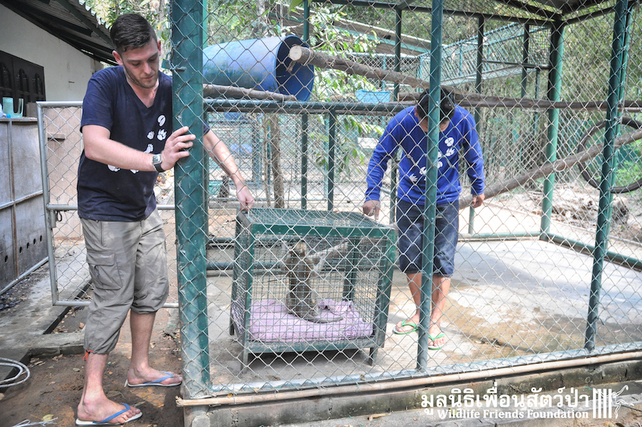 Macaque rescue Catoon HuaHin 301215 418