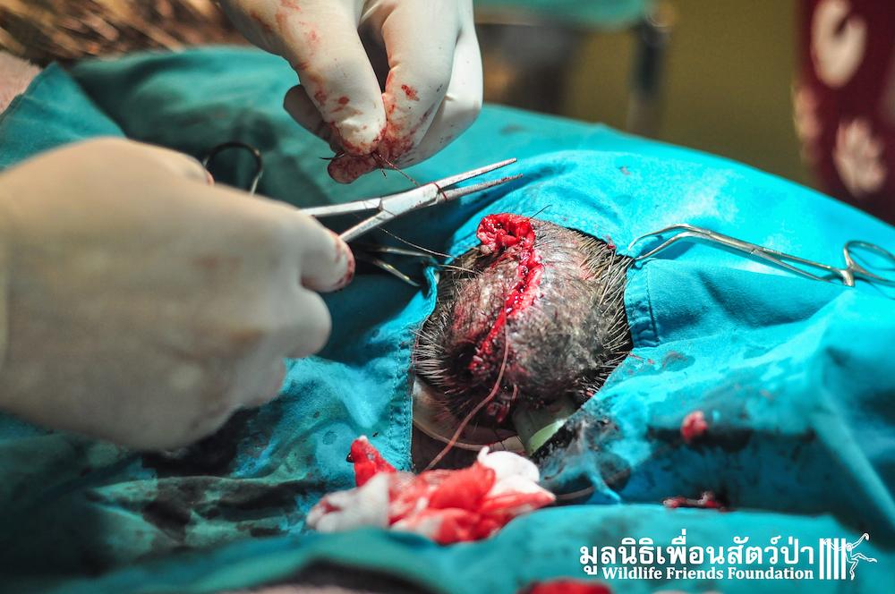 Porcupine rescue WadYangChom 010216 163