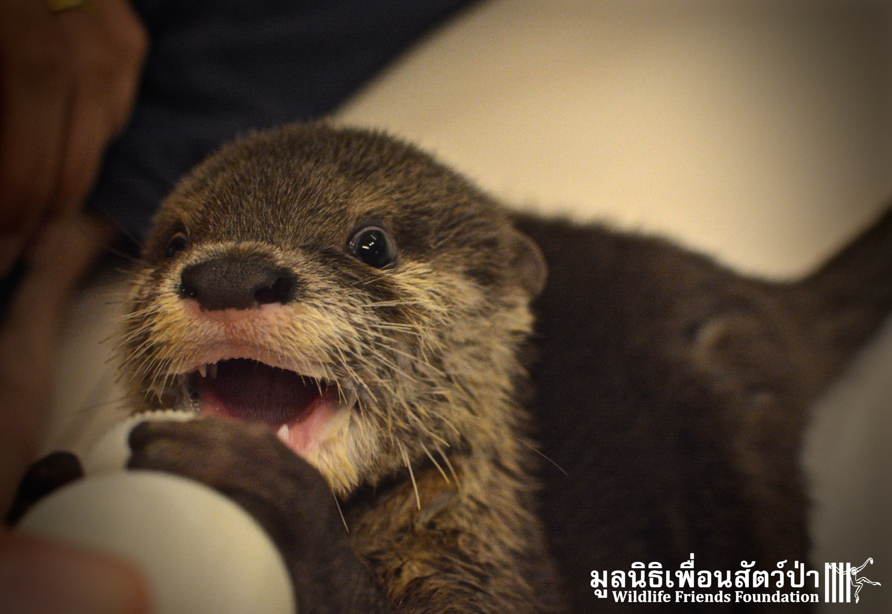 Oscar The Otter Arrives At WFFT