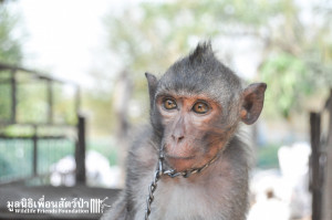 Macaque rescue Jack 080316 3343