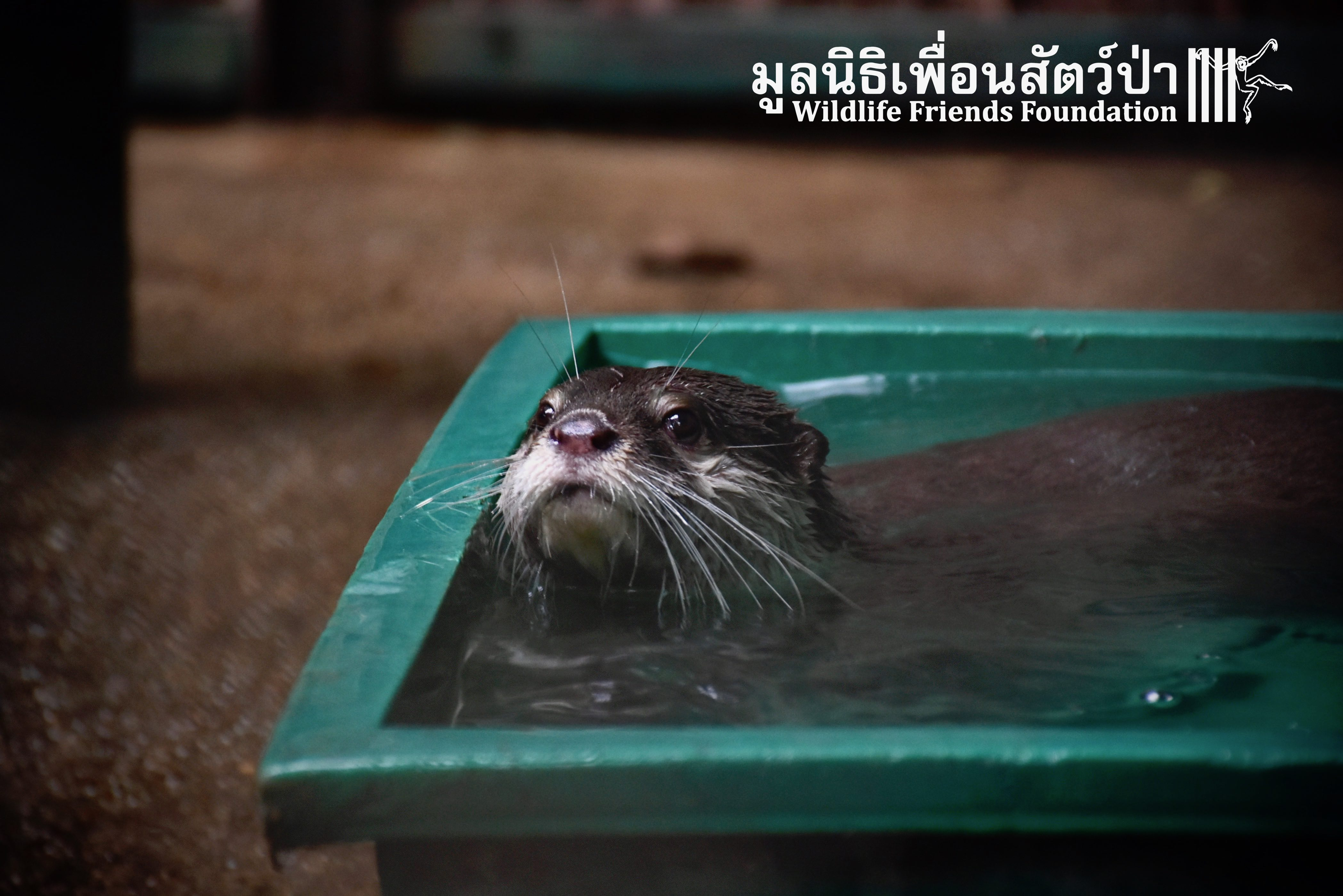 Welcome To Jubo and Jibi Who Have Joined Our Growing Otter community.