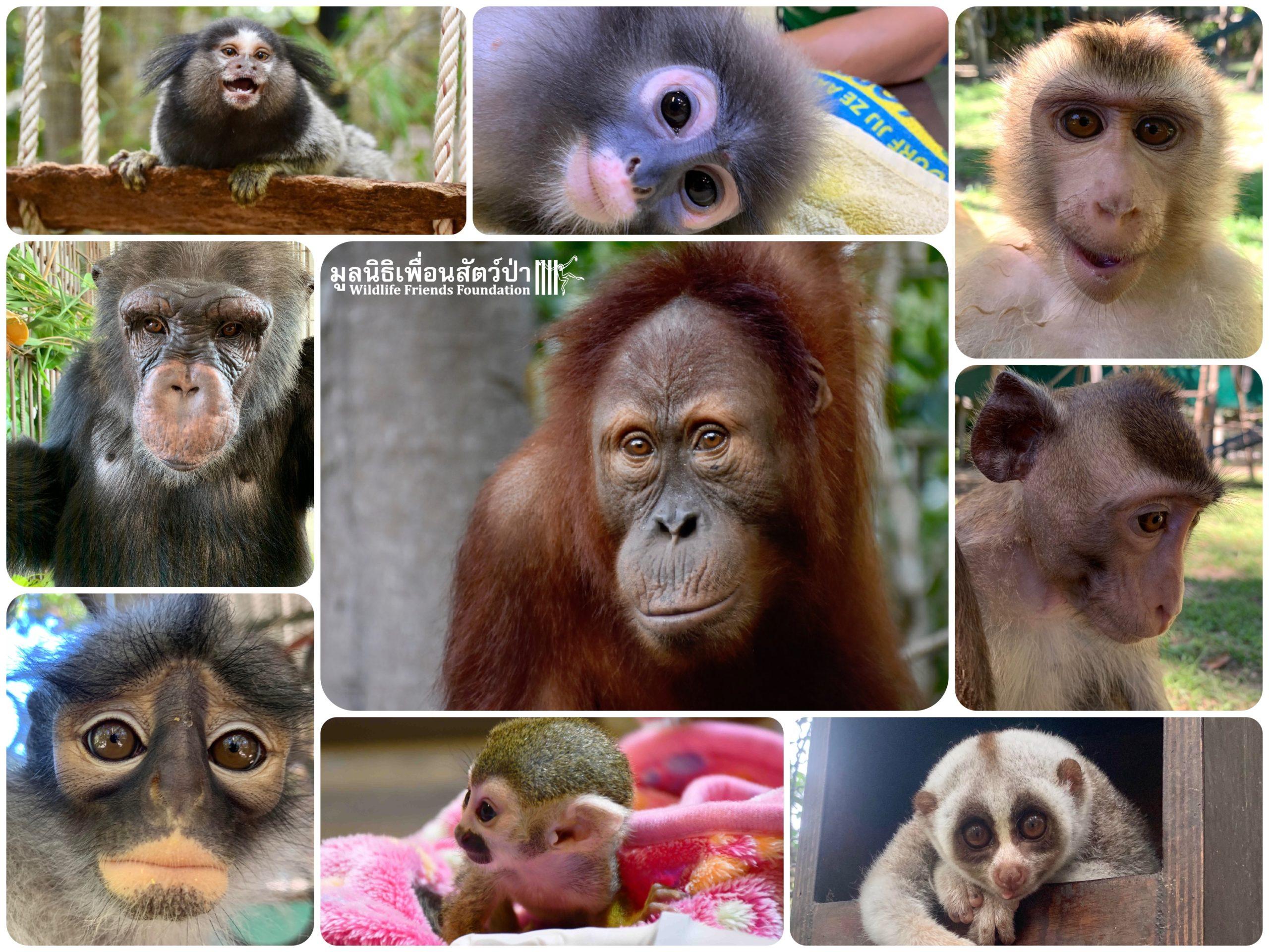 Volunteers Archives Wildlife Friends Foundation Thailand