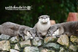 Otters At WFFT