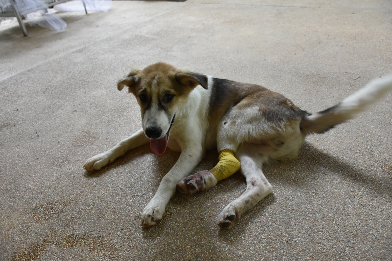 PAT Clinic Injured Puppy