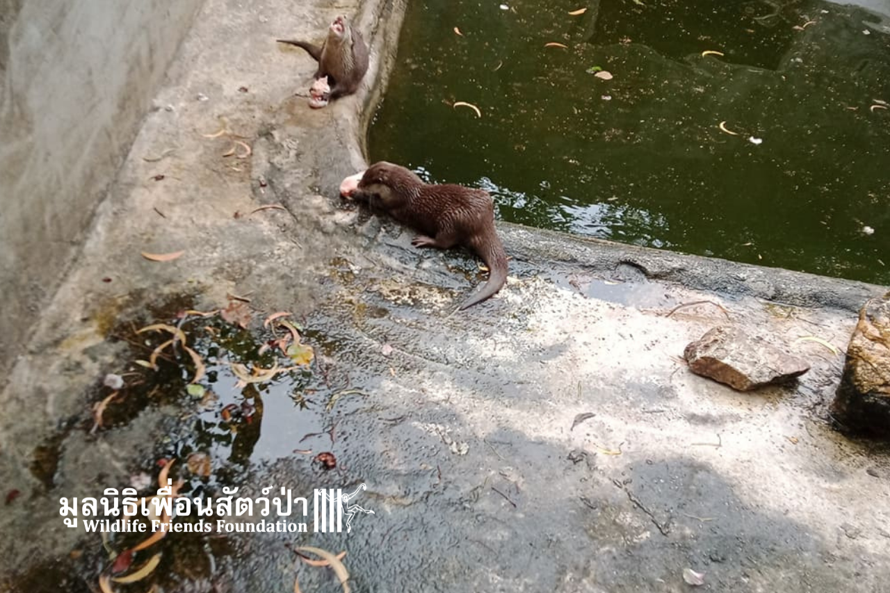 Otters In Need Of Rescue