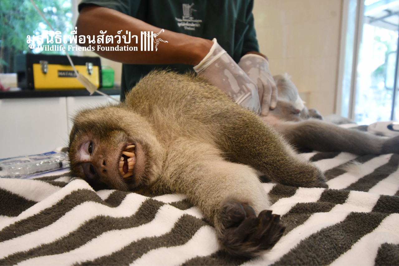 Tao Macaque Health Check