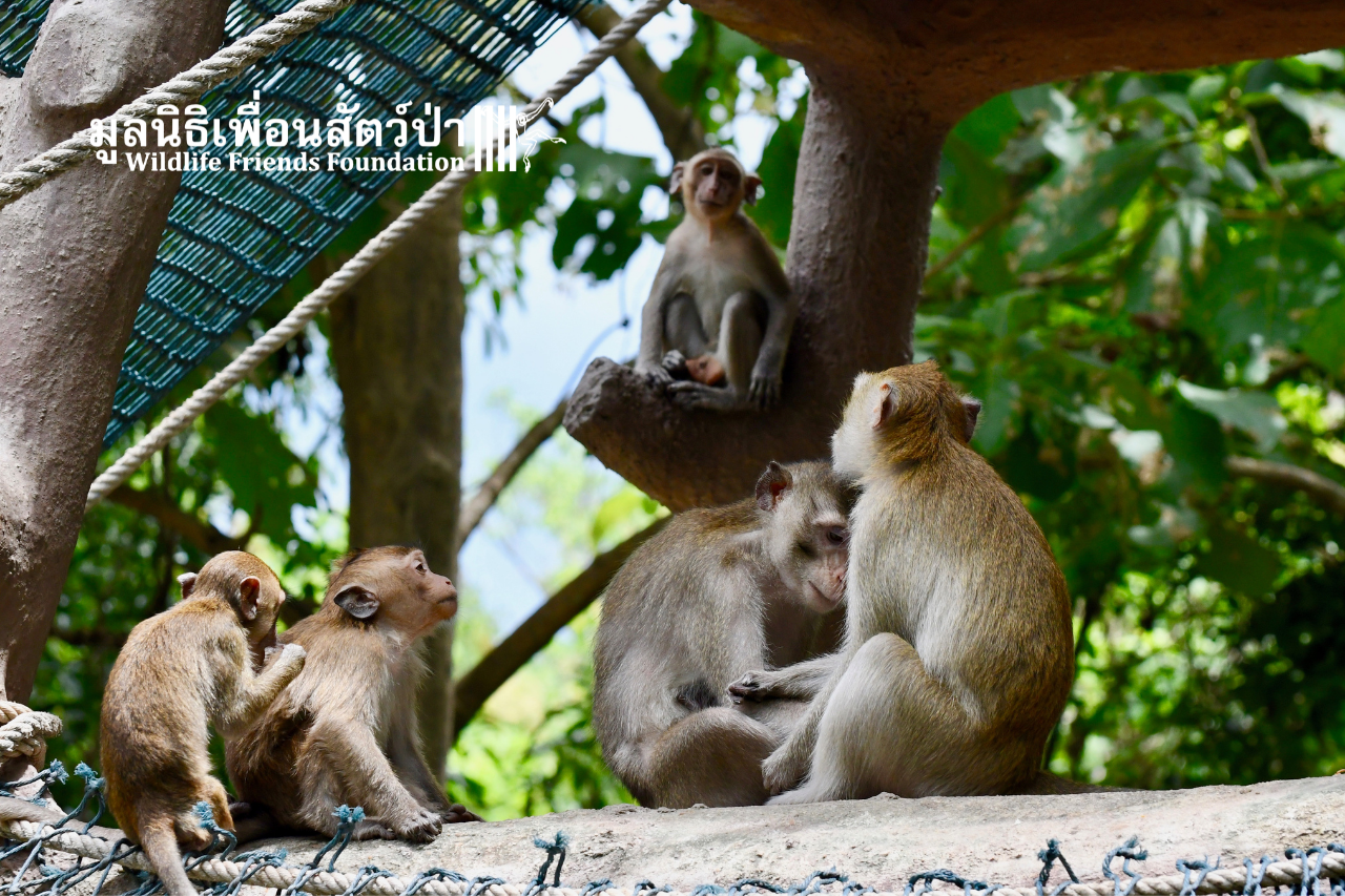 New Macaque Family