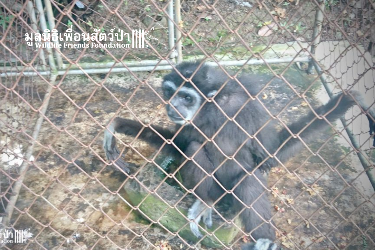 King Before Rescue, Emaciated