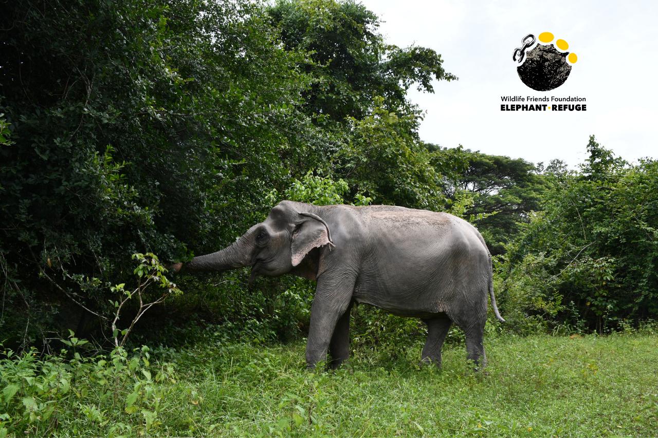 Boon Ma - Elephant