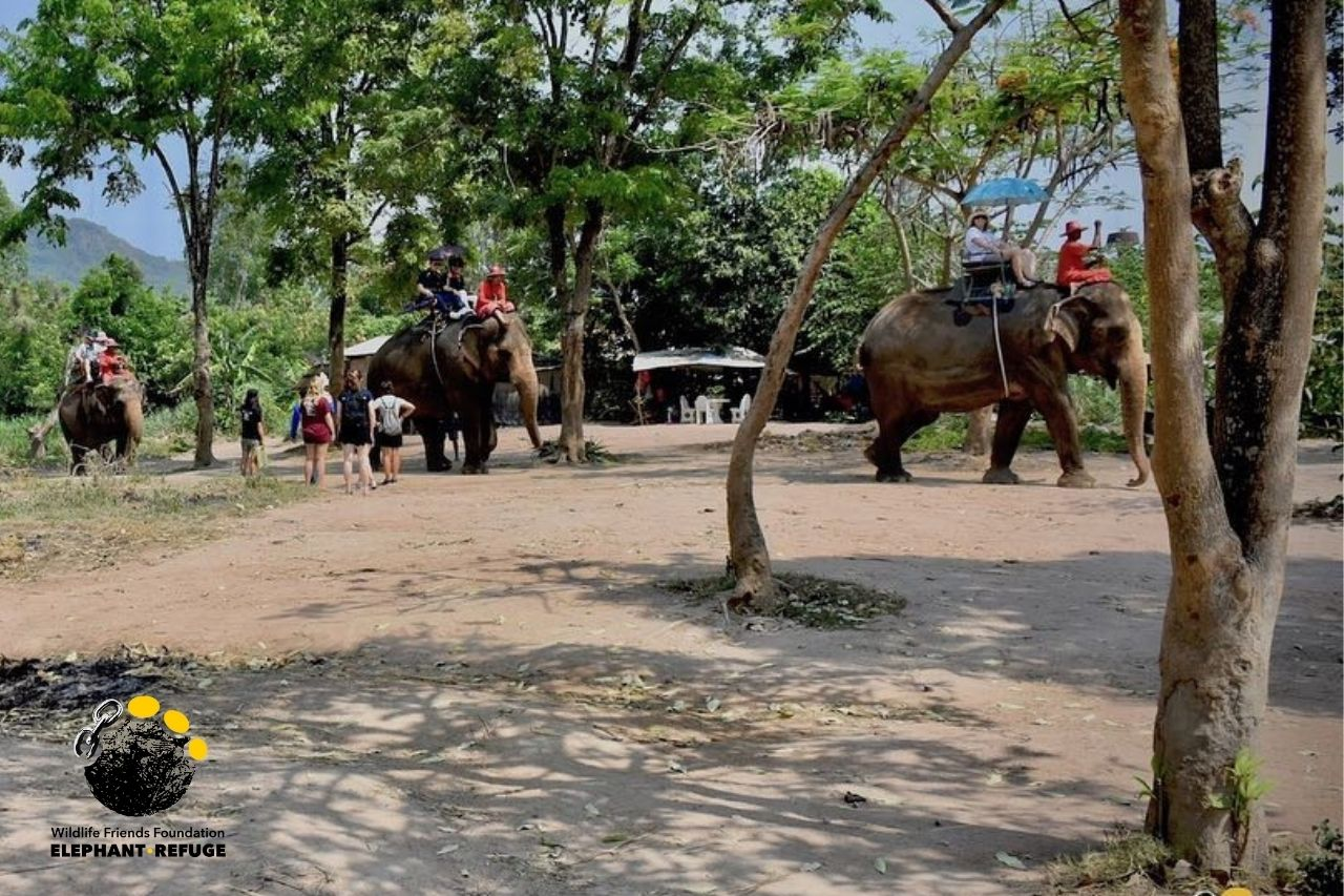 Alicia Forced To Give Elephant Rides